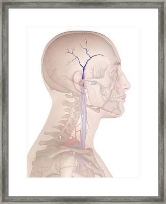 Human Veins Framed Print by Sciepro