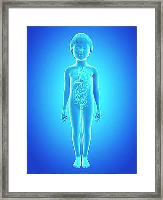 Internal Organs Of Boy Framed Print