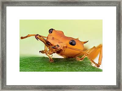 Leafcutter Ant Framed Print