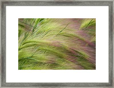 Whispers Framed Print by Lon Goudey