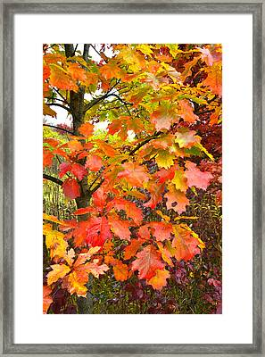 Mchenry County Fall Color Framed Print by Ray Mathis