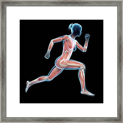 Muscular System Of Jogger Framed Print