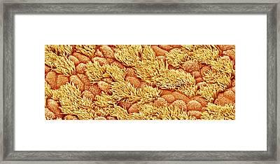 Nasal Lining Framed Print