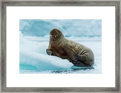 Norway Svalbard Nordaustlandet Island Framed Print