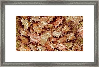 Oleaster Leaf Trichomes Framed Print