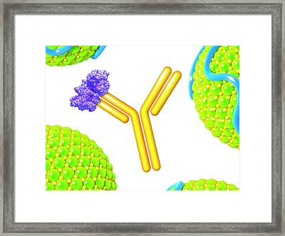 Pcsk9 And Inhibitor Framed Print by Maurizio De Angelis