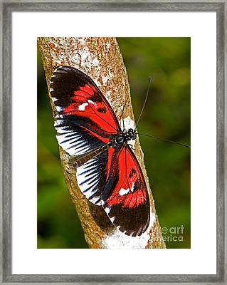 Piano Key Butterfly Framed Print by Millard H. Sharp