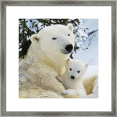 Polar Bear With Cub Framed Print