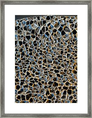 Polystyrene Foam, Sem Framed Print by Stefan Diller