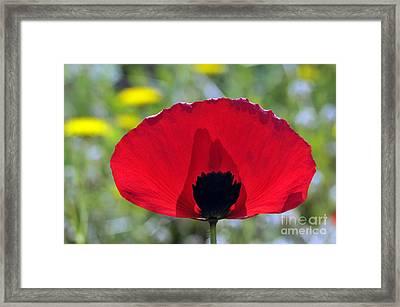 Poppy Flower Framed Print by George Atsametakis