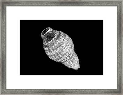 Radiolarian Protozoan Framed Print by Frank Fox