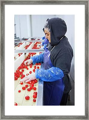 Radish Farming Framed Print by Jim West