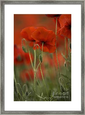 Red Framed Print by Nailia Schwarz