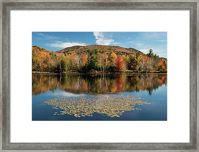 Reflection Of Trees On Water Framed Print