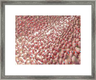 Rhinovirus Framed Print