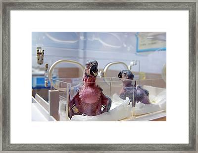 Safari Park Animal Hospital Framed Print