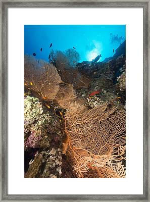 Sea Fan And Tropical Reef In The Red Sea. Framed Print by Stephan Kerkhofs