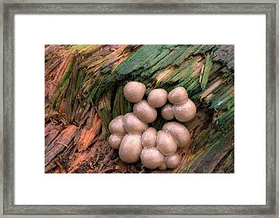 Slime Mould Framed Print