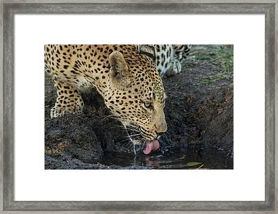 South Africa, Sabi Sabi Private Game Framed Print