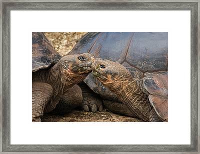 South America, Ecuador, Galapagos Framed Print by Jaynes Gallery