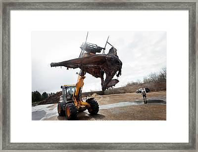 Sperm Whale Skeleton Preparation Framed Print