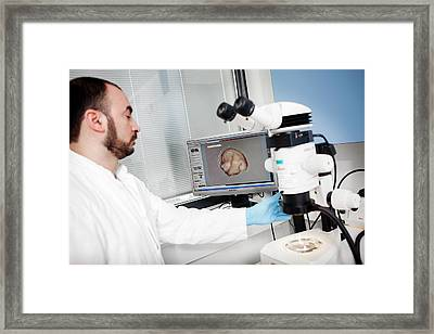 Sperm Whale Tissue Analysis Framed Print by Thomas Fredberg