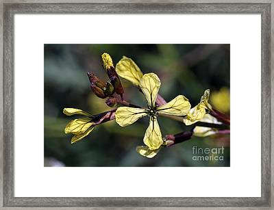 Framed Print featuring the photograph Spring Wild Flower by George Atsametakis