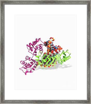 Tata Box-binding Protein Complex Framed Print by Ramon Andrade 3dciencia
