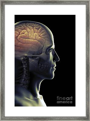 The Human Brain Framed Print by Science Picture Co
