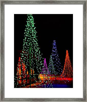 5 Trees And A Reflection Framed Print by Carol Toepke