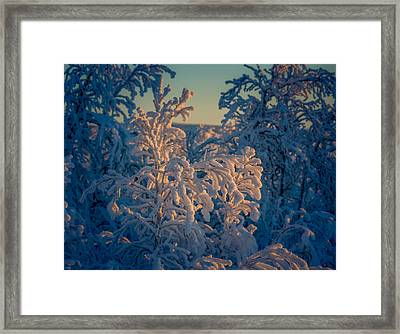 Trees In The Frozen Landscape, Cold Framed Print by Panoramic Images
