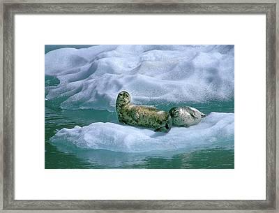Usa, Alaska, Inside Passage Framed Print