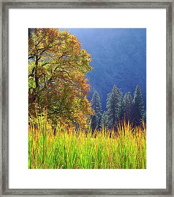 Usa, California, Yosemite National Park Framed Print by Jaynes Gallery