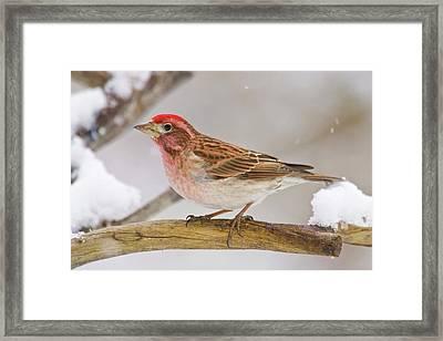 Usa, Colorado, Frisco Framed Print
