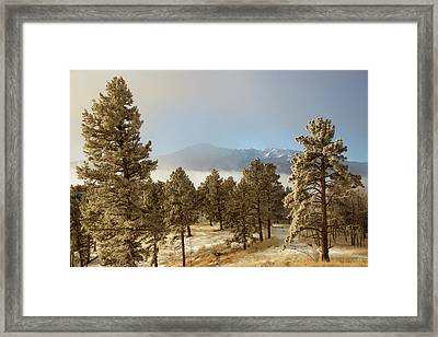 Usa, Colorado, Pike National Forest Framed Print by Jaynes Gallery