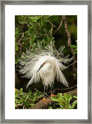 Usa, Florida, Anastasia Island Framed Print by Jaynes Gallery