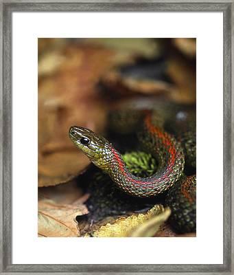 Usa, Oregon, Multnomah County Framed Print