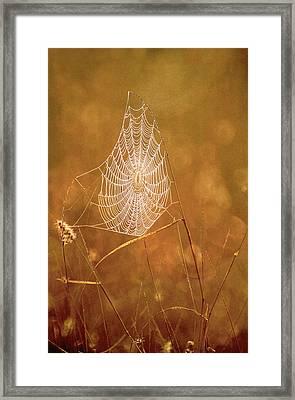 Usa, Texas, Rio Grande Valley, Mcallen Framed Print