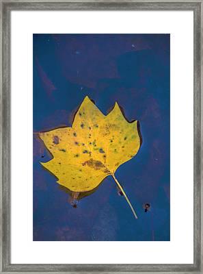 Usa, Virginia, Mclean Framed Print
