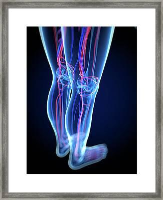 Vascular System, Artwork Framed Print by Sciepro