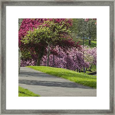 Victoria Park Chatham Framed Print by Dawn OConnor