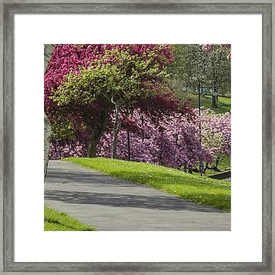 Victoria Park Chatham Framed Print