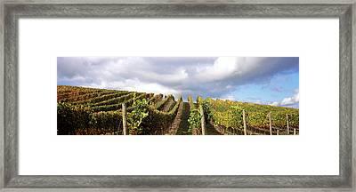 Vineyard, Napa Valley, California, Usa Framed Print by Panoramic Images