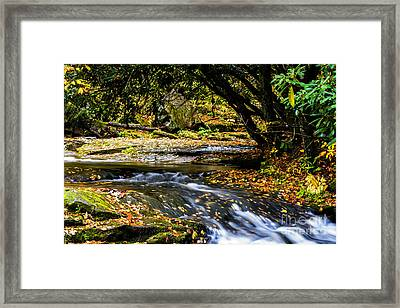 Williams River Headwaters Framed Print