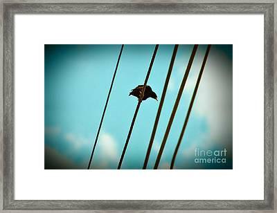 5 Wire 2 Framed Print by Lynda Dawson-Youngclaus