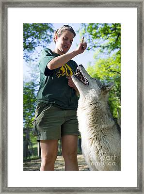 Wolf Research Framed Print by Louise Murray