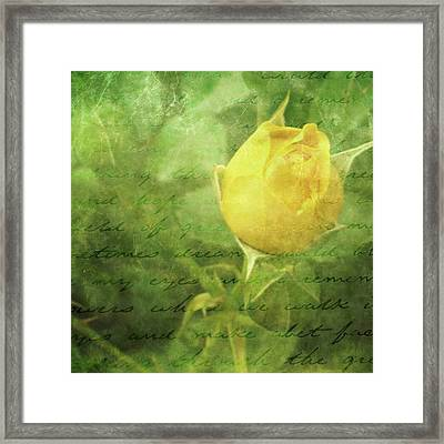 Yellow Rose Framed Print by Cathie Tyler