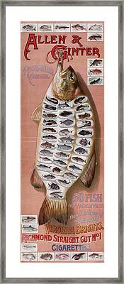 50 Fish From American Waters Framed Print by Georgia Fowler