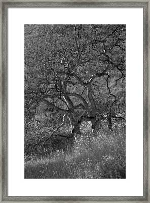50 Shades Of Gray Trees Framed Print