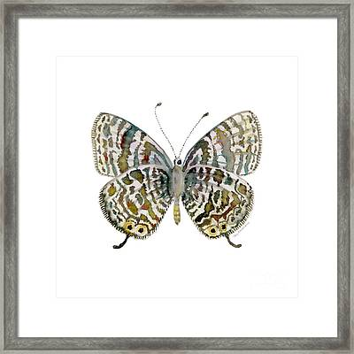51 Lang's Short-tailed Blue Butterfly Framed Print by Amy Kirkpatrick